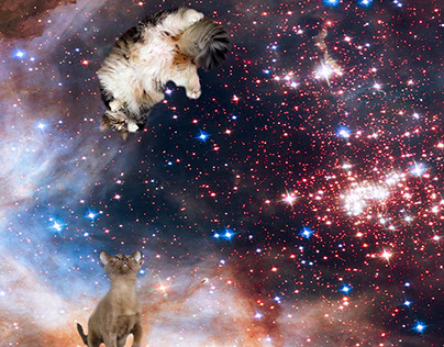 Cats In Spaaace