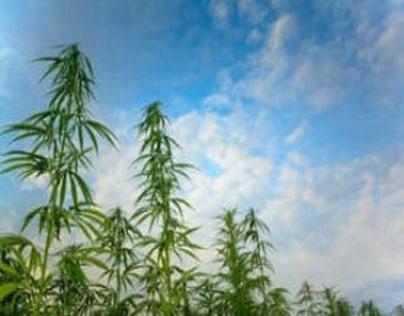 ¡Cómo obtener marihuana medicinal en Puerto Rico!