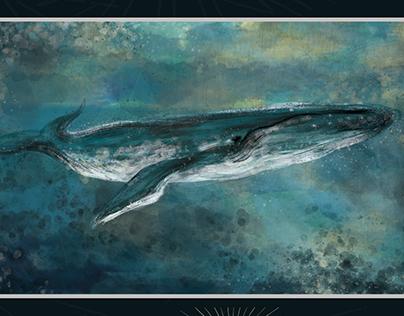 Humpback whale (keporkak)