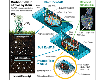 EcoFAB Carbon Flow Figure Illustration