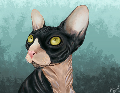 cat sphinx