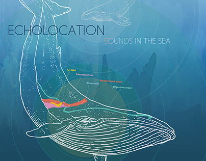Echolocation: Sounds in the Sea