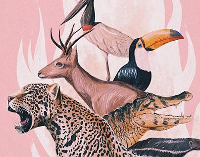 Ilustração e Animação • Pantanal em Chamas • Brasil
