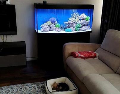 Морской аквариум в аренду в гостиную