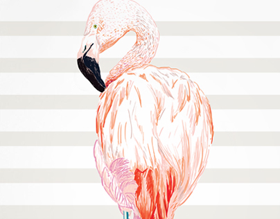 ILLUSTRATIONS - Animals