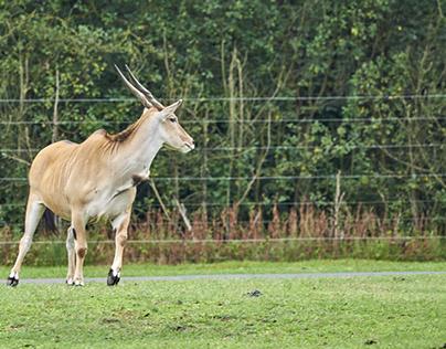 Tiere im Serengetipark Hodenhagen