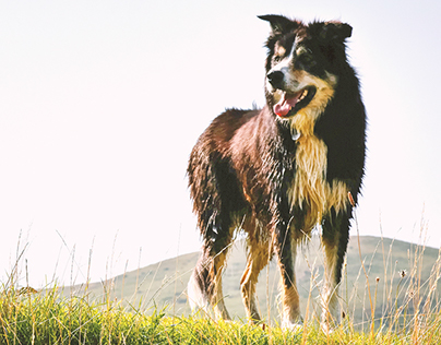 North Coast Pets –Volusion Client