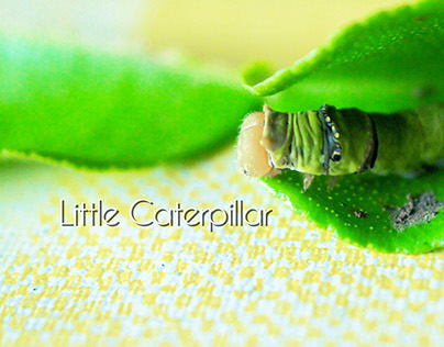Little Caterpillar