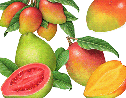 30 Years of Mango Packaging Illustrations