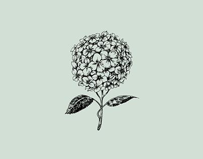 Branding / Carmen Country Flowers