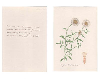 Hierbas - ilustraciones botánicas