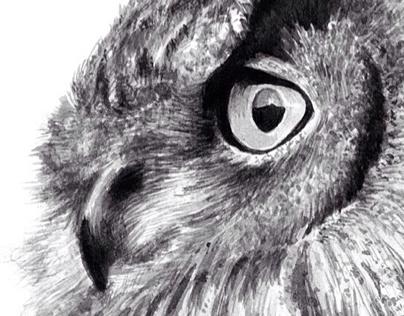 부엉이 (Owl)