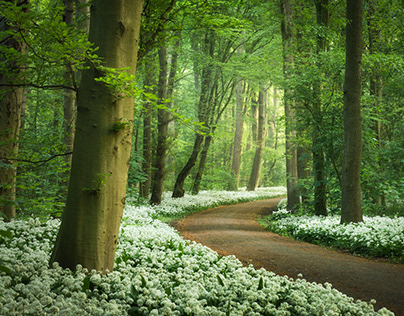 The Garlic Forest