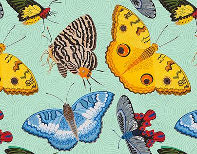 Formosan Butterflies