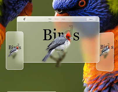 Birds Website Design-Free Glassmorphism-Responsive