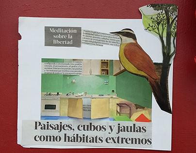 Paisajes, cubos y jaulas como hábitat. Collage covid-19