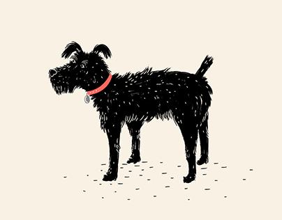Un Perrito
