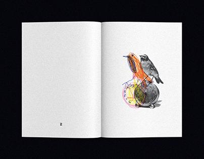 I Want to Draw Birds