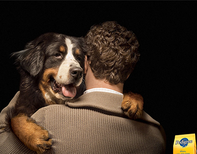 Pedigree, dog loves