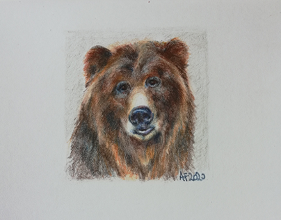 A brown bear small portrait