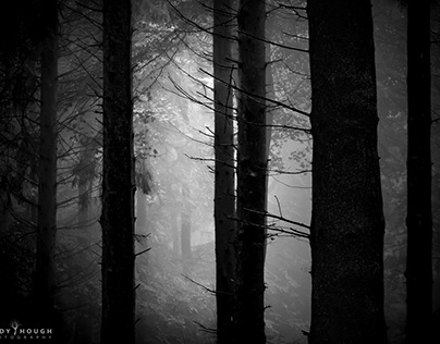 Deep and dark in the Woods