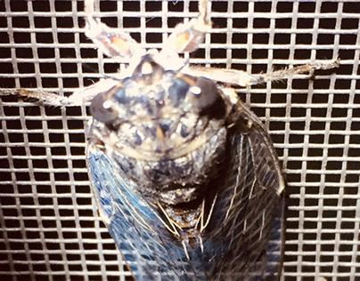 cicada motion
