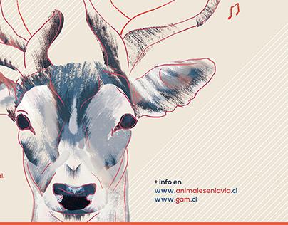 4to Ciclo de Jazz / Animales en la Via