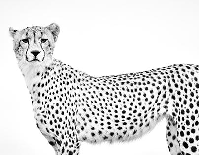 AFRICA: BIG CATS