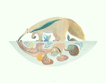 Especies Autóctonas