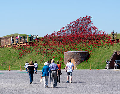 Poppies at Fort Nelson