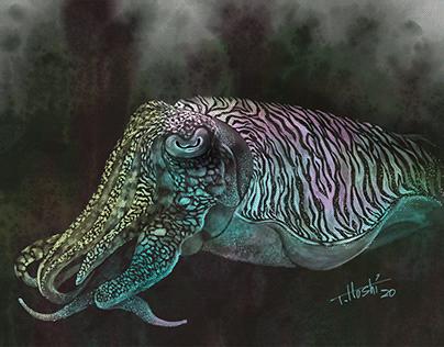 Scratch Art/ Cuttlefish