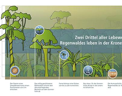 Infografik Regenwald