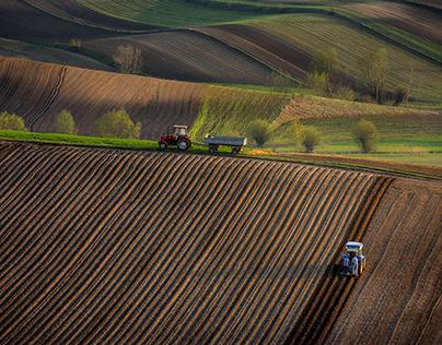 Corduroy field. Ponidzie. Poland.