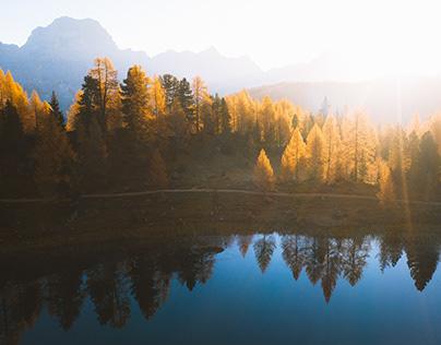 The Golden Forest // Dolomiti