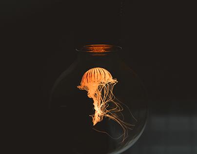magical bulb !