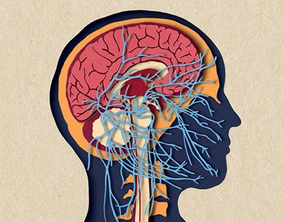 BIOTUD Application - Nervous system