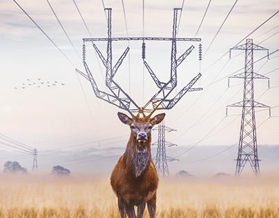 Deer manipulation