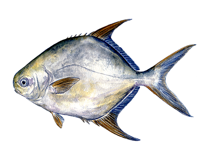 Field guide illustrations of Asian fish species
