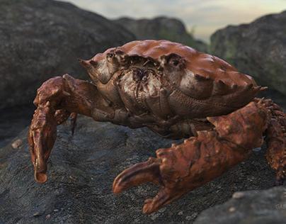 Procedural Crab