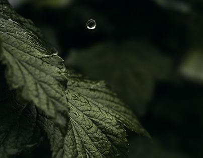 The secret life of leaves