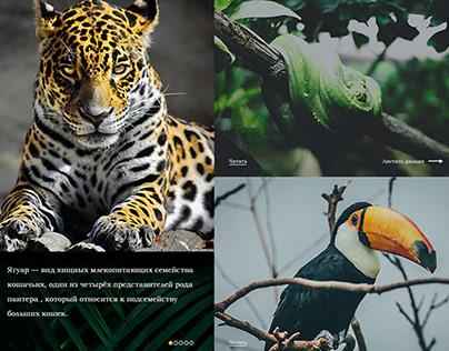 Jungle of Brazil