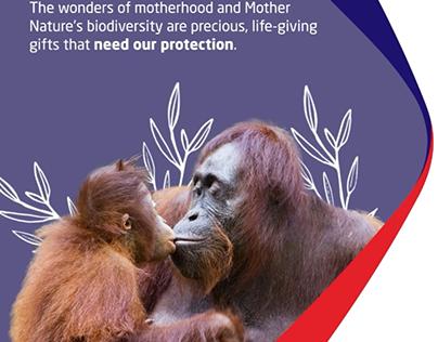 MSIG — Biodiversity campaign