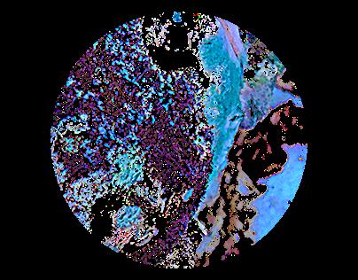 Bacteria Plates