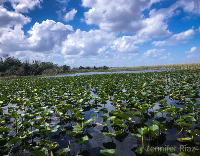 The Amazing Florida Everglades
