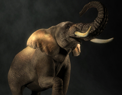 Elephant: Texture and Lighting