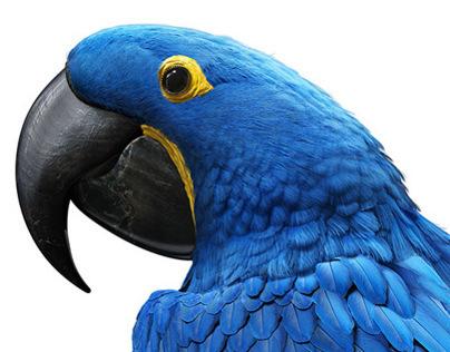 Panasonic 3D Blue Macaws