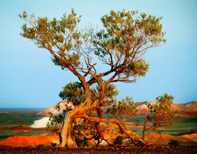 Landscapes - Colour