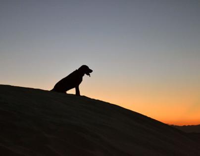 Sunset Dog.