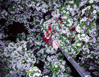 Selfie Stick Series II: Floral