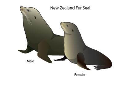 Sea Mammal Mitigation Diagrams